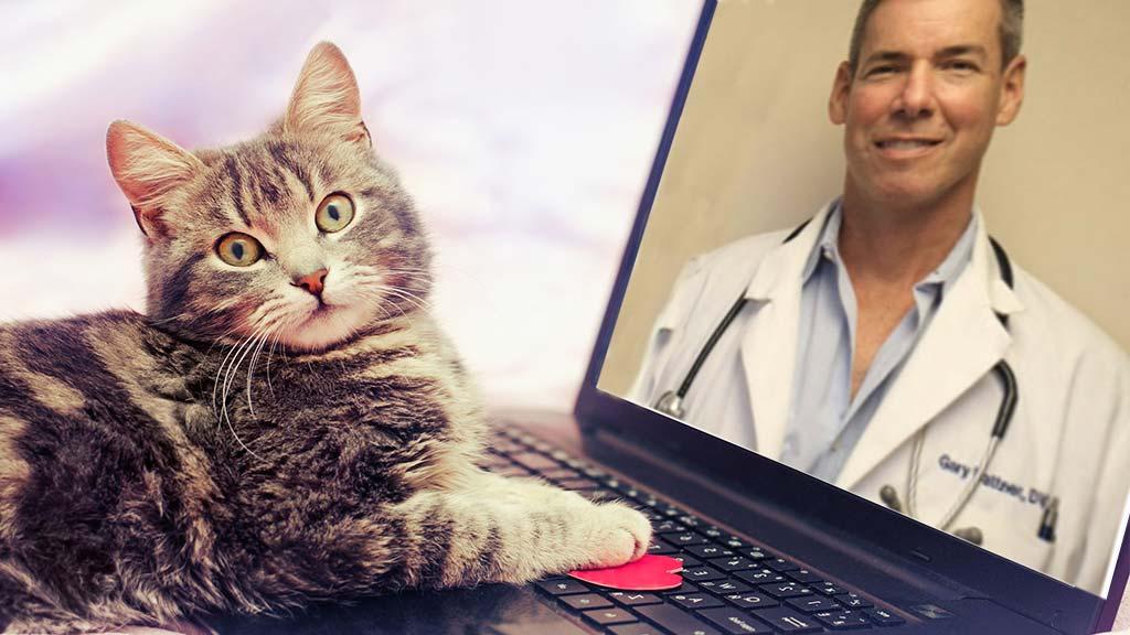veterinary telemedicine in Nassau county
